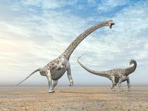 Diplodocus del dinosaurio ilustración del vector