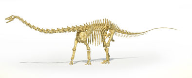 Diplodocus dinosaur full skeleton photo-realistc rendering. Perspective view. Royalty Free Stock Photography