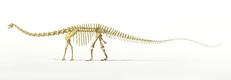 Diplodocus dinosaur full skeleton photo-realistc rendering. Royalty Free Stock Photo