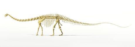 Diplodocus dinosaur full skeleton photo-realistc rendering. Royalty Free Stock Photo