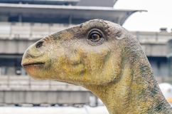 Diplodocus dinosaur head. In event Stock Photo