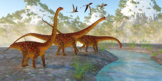 Diplodocus Dinosaur Morning Stock Image