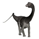 Diplodocus dinosaur standing - 3D render Royalty Free Stock Photo
