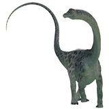 Diplodocus Dinosaur on White. Diplodocus was a sauropod herbivorous dinosaur that lived in the Jurassic Era of North America Stock Images