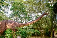 A Diplodocus at Dinosaur Island, aka, Jurassic Park. This is a Diplodocus, the first dino seen as you walk through the park Stock Images