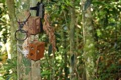 Diplomatas da caixa ou da caixa da armadilha da câmera a uma árvore na floresta tropical Fotos de Stock
