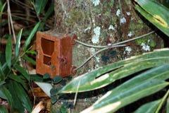 Diplomatas idosos da caixa ou da caixa da armadilha da câmera a uma árvore nas frentes da chuva Imagens de Stock Royalty Free