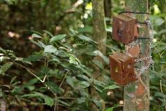 Diplomatas idosos da caixa ou da caixa da armadilha da câmera a uma árvore nas frentes da chuva Imagens de Stock