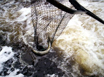 Dipnet de los pescados fotografía de archivo