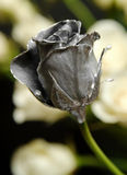 Dipped. A small rose bud dipped in silver stock photos