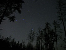 Dipper αστεριών νυχτερινού ουρανού μεγάλη δασική ατμόσφαιρα αστερισμού Στοκ Εικόνες