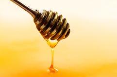 Dipper do mel imagem de stock royalty free