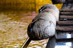 Dipper kokosnotenshell Stock Fotografie