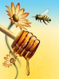 Dipper van de honing vector illustratie