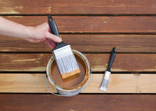 Dipping paint brush into a can of wood stain. Handing dipping paint brush into can of fresh stain royalty free stock photography