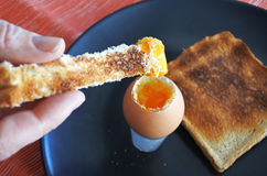 Dipping piece of toast in open soft boiled egg Royalty Free Stock Photos