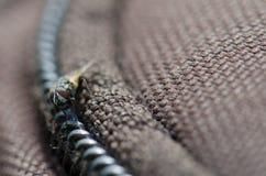 Diptera. Diptera Hylemyia latevittata. Guayadeque ravine. Aguimes. Gran Canaria. Canary Islands. Spain Stock Images