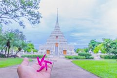 Dipterocapus alatus pink flower on the palm hand with blurred the sanctuary, temple,background. Royalty Free Stock Images