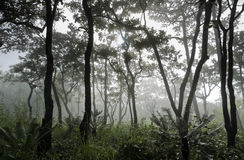 Dipterocarp forest Stock Images