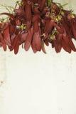 Dipterocarpus-intricatus rote Blumen auf altem Holz stockbilder