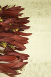 Dipterocarpus-intricatus rote Blumen auf altem Holz stockbild