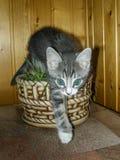 Diríjase el gatito imagen de archivo