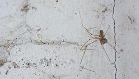 Αράχνη και βρώμικος ιστός αράχνης στον τοίχο  είναι η αιτία του dir Στοκ φωτογραφίες με δικαίωμα ελεύθερης χρήσης