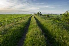 Diramazione del paese attraverso il prato verde Fotografia Stock Libera da Diritti