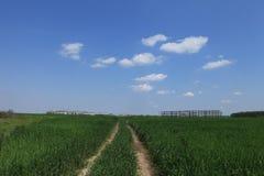Diramazione del paese attraverso il prato verde Fotografie Stock Libere da Diritti