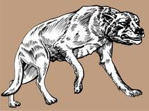 Dire Wolf stock photos