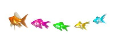 Dirección y diversidad de los Goldfishes Imagen de archivo libre de regalías