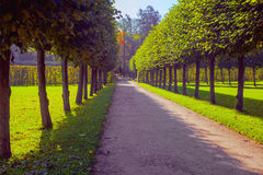 A direct alley in the Catherine Park in Tsarskoye Selo, Pushkin, St. Petersburg, Russia. A straight alley in the Catherine Park in Tsarskoye Selo, Pushkin, Saint Royalty Free Stock Image