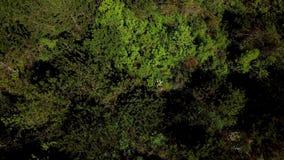 Direct boven mening die vooruit boven mooi groen bos vliegen stock videobeelden