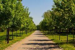 Direct linear perspective in the Park. Direct linear perspective in the green Park Stock Photo