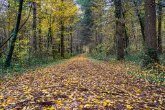 Direct path in the middle of the forest royalty free stock images