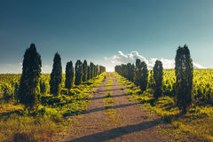 Direct Road With Rows Of Poplar Trees Left And Right, One Point Perspective Horizon, Rural Landscape Royalty Free Stock Image