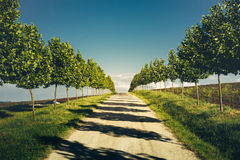 Direct Road With Rows  Trees Left And Right, One Point Perspective Horizon, Picturesqie Rural Landscape Royalty Free Stock Photo
