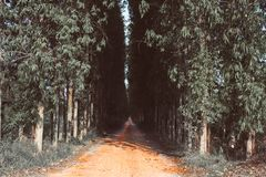 Direct Road With Rows Trees Left And Right, One Point Perspective Horizon, Picturesque Rural Landscape nature environment concept. Road With Rows Trees royalty free stock image
