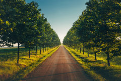 Direct Road With Rows Trees Left And Right, One Point Perspective Horizon, Picturesque Rural Landscape Royalty Free Stock Images