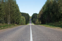 Direct road among trees Stock Images