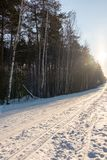 Direct ski trail in the winter Woods at sunny day stock images