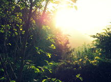 Direct sun light coming through the foliage with rain drops falling Royalty Free Stock Photos
