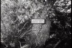 Direction sign to Albuquerque, New Mexico tacked to tree stock video footage