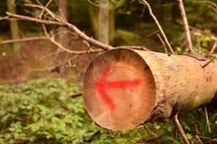 Directional arrow Stock Image