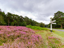 Directional Heather. Heather growing by a road sign in the New Forest National Park Royalty Free Stock Images