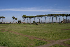 Directly to the Appian Way in Rome Park. This is an overview of the Appian Way in Rome Park, you can be distinguished on the background of the pines and the Stock Images