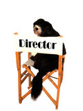 Director dog. A black director filmaker funny dog Stock Photography