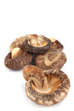 dired грибы Стоковые Фото