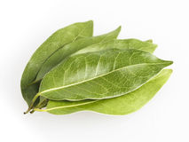 Dired Bay Leaves Royalty Free Stock Photo