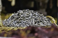 Dired Fish. Dried and salted fish sold in the open public market Royalty Free Stock Photos